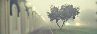 cropped-blur-2.jpg